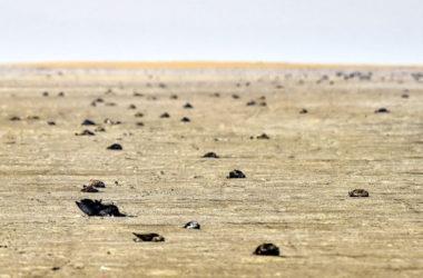 1000s of Birds Found Dead At India's 'Sambhar Lake' Shore
