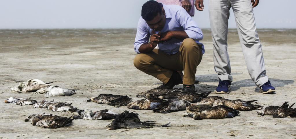 What Could be The Reason? Birds Found Dead