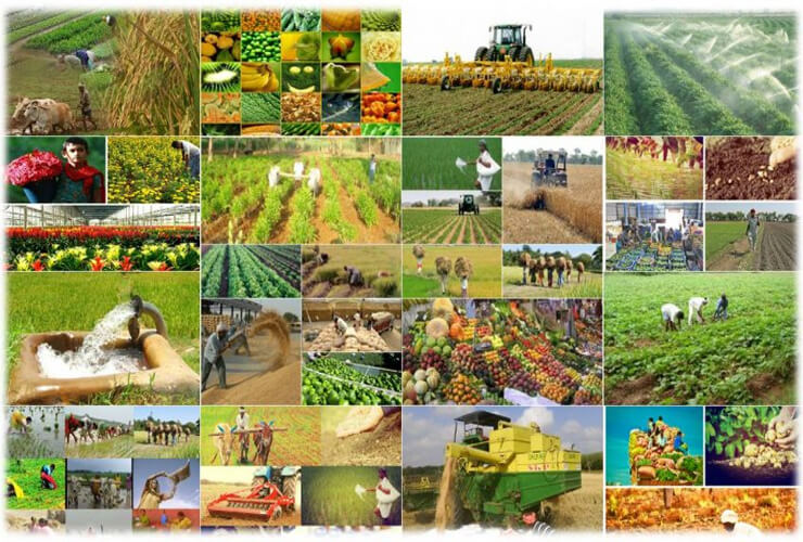 Experts Demand 'Independent Body' for Agri Development