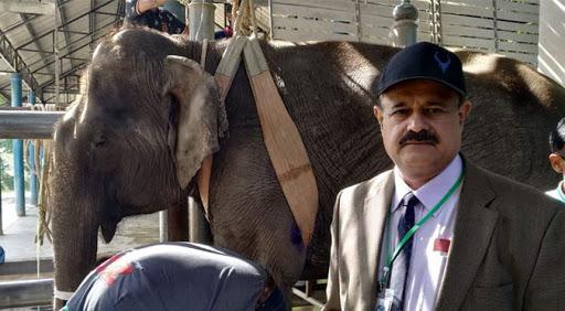 Elephant Doctor